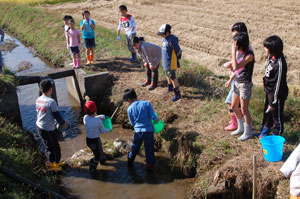 子供会育成会で用排水路の生物調査(コイやナマズ、フナ、タナゴ、食用ガエルが棲息