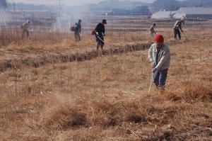休耕田の野焼きと草刈